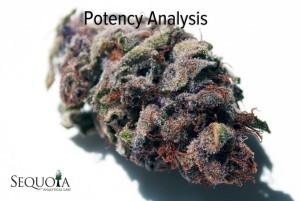 potencynew-1024x686